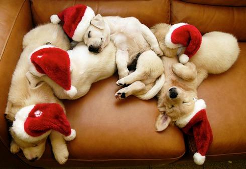 perritos!!