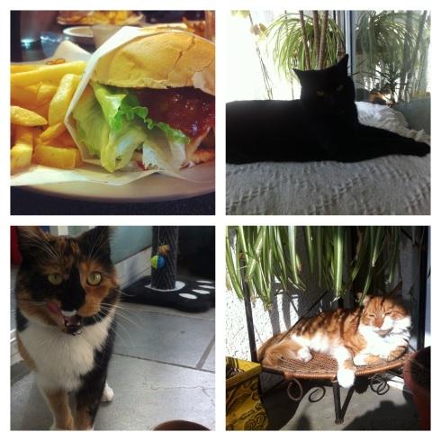comida+gatos