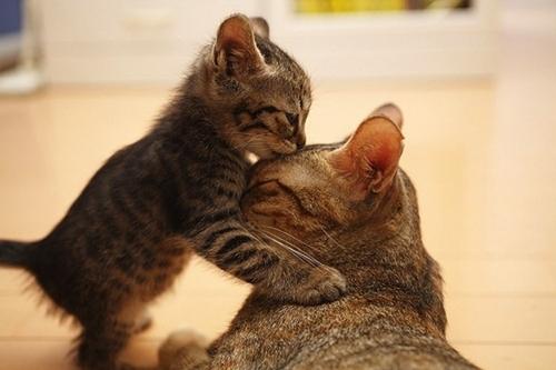 such a cute kiss
