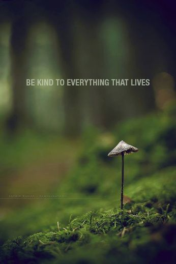 be kind to everything that lives